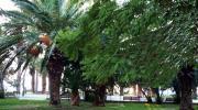 Лутраки - парк в городе