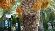 Лутраки - пальма в парке